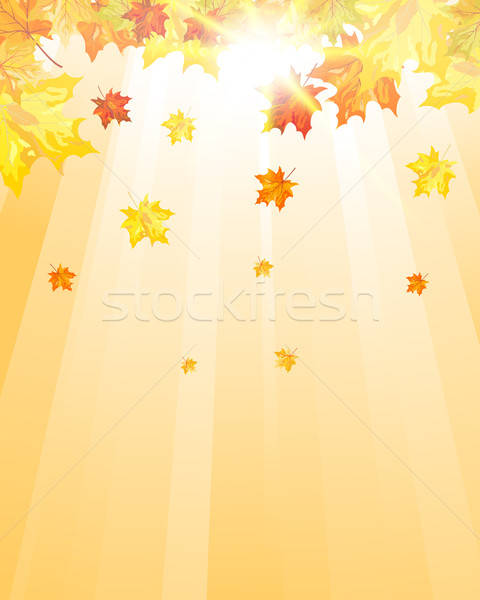 Autumn maple leaves Stock photo © angelp