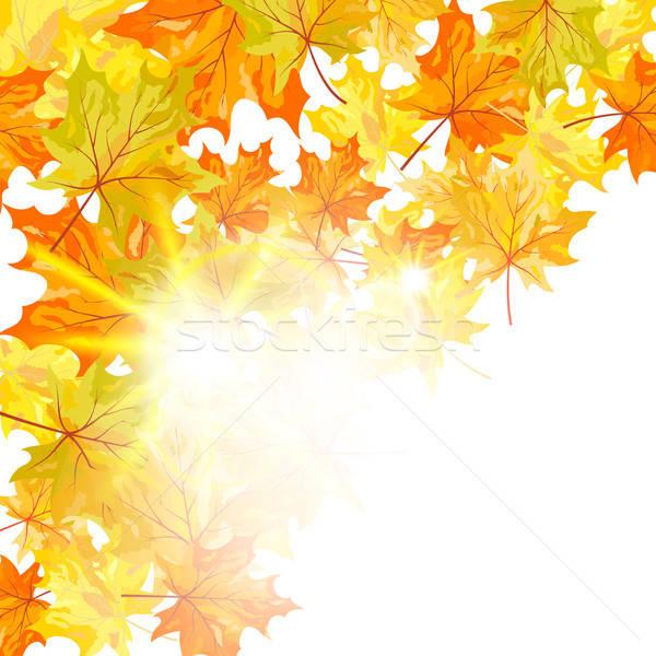Autumn maple leaves  Stock photo © angelp