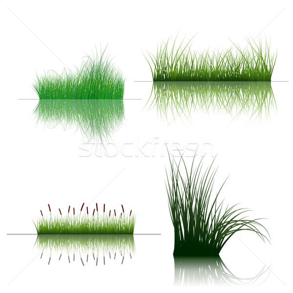 grass on water Stock photo © angelp