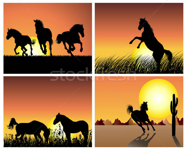 horse on sunset background Stock photo © angelp