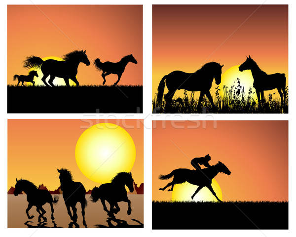 horse on sunset backgrounds set Stock photo © angelp