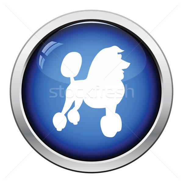 пудель икона кнопки дизайна собака Сток-фото © angelp