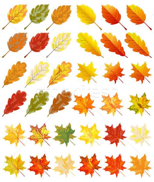 Stok fotoğraf: Toplama · renk · sonbahar · yaprakları · ağaç · orman · güzellik