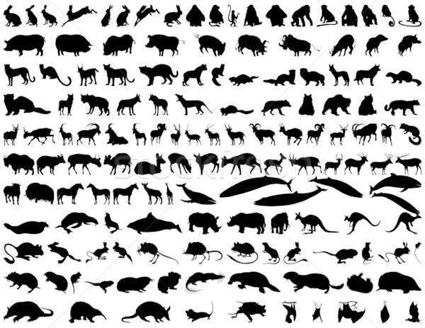 Vector animals Stock photo © angelp