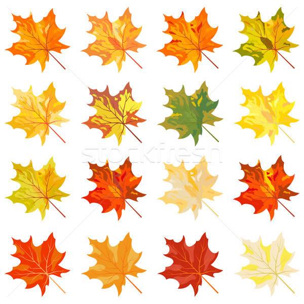 Culoare Toamn Frunze Vector Copac Dure Imagine Colorat