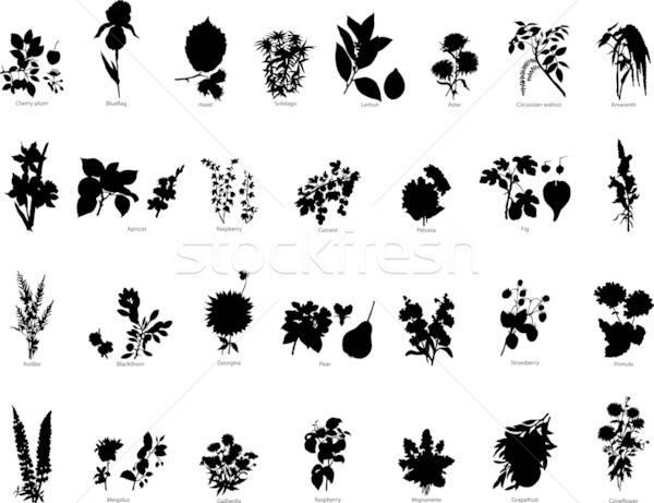 Сток-фото: Ягоды · цветы · коллекция · различный · вектора