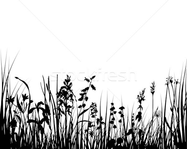 Gras ontwerp bloemen bos zon landschap Stockfoto © angelp