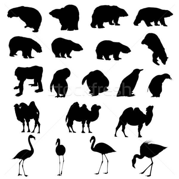 Set of bears, ape, penguins, camels and flamingos  silhouettes. Stock photo © angelp