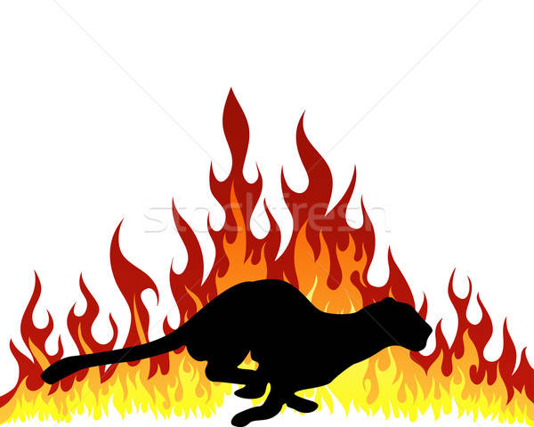 flame puma Stock photo © angelp