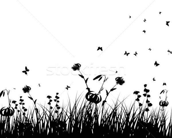 Meadow And Butterflies Stock photo © angelp