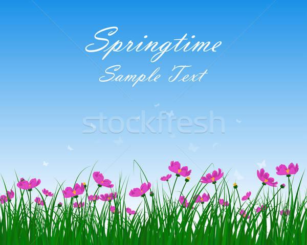 Springtime Meadow Stock photo © angelp