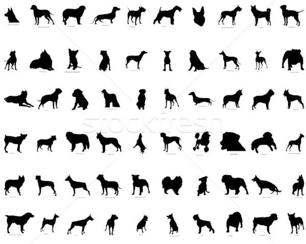 vector silhouettes of  dogs Stock photo © angelp