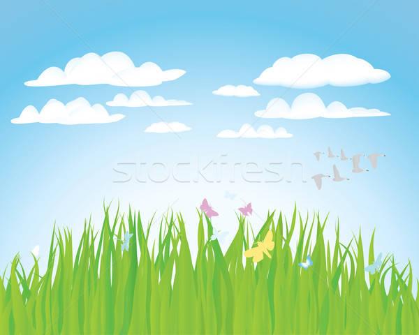 summer landscape Stock photo © angelp