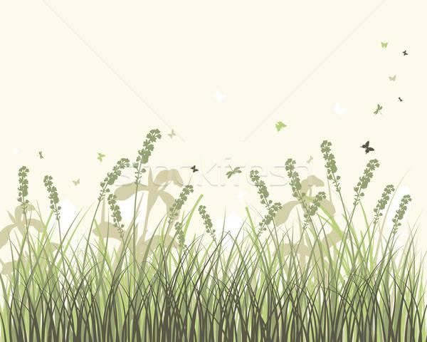 луговой вектора трава объекты Сток-фото © angelp