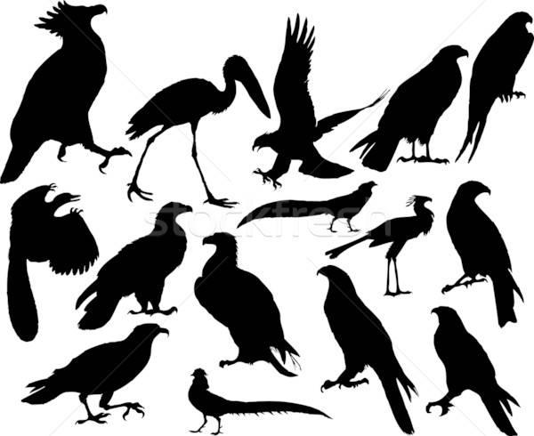 Vector flying birds Stock photo © angelp