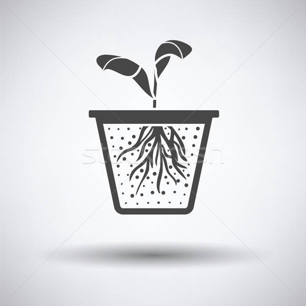 Seedling icon Stock photo © angelp