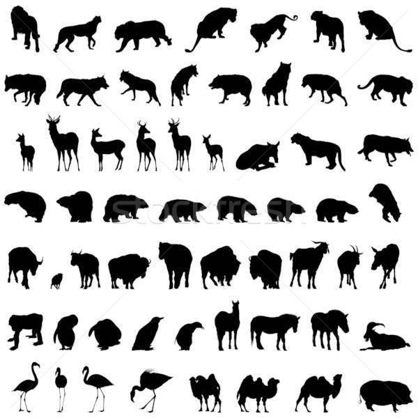 Stock fotó: állat · szett · nagy · gyűjtemény · különböző · sziluettek