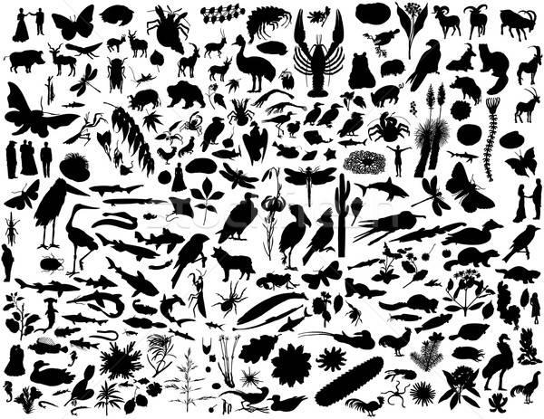 ストックフォト: コラージュ · シルエット · コレクション · 女性 · 水 · 犬