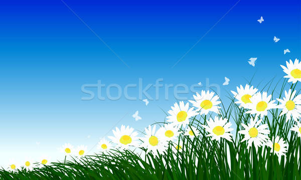 Chamomiles on summer background Stock photo © angelp