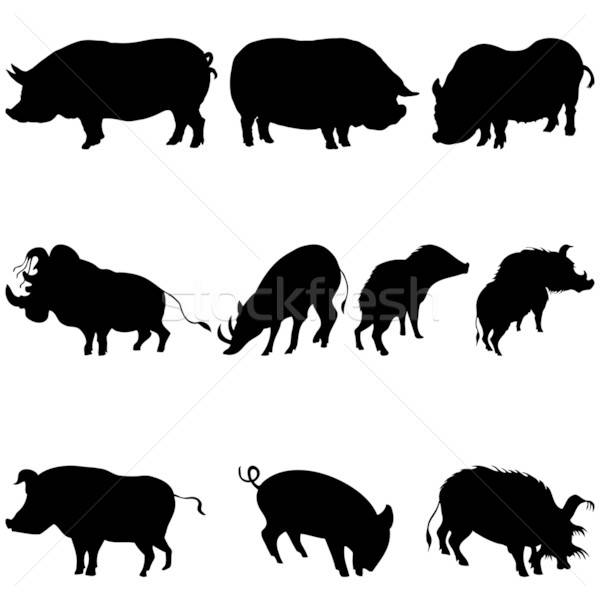 pigs and boars silhouettes set Stock photo © angelp