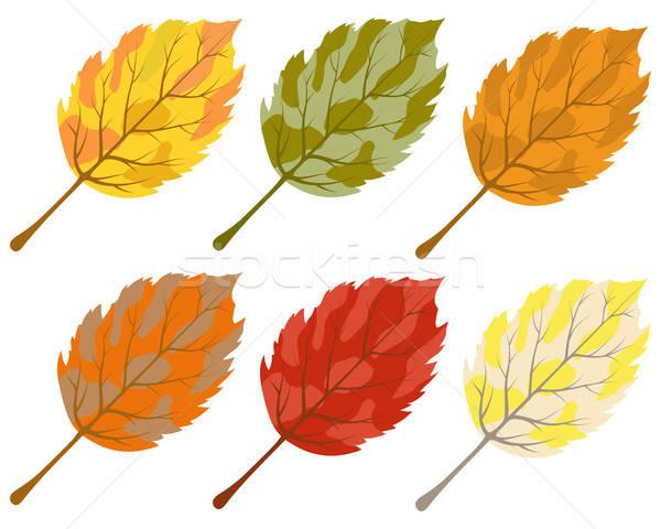 コレクション 色 紅葉 ツリー 森林 美 ストックフォト © angelp