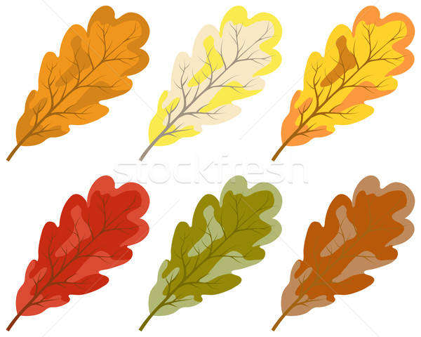 Collection of color autumn leaves Stock photo © angelp