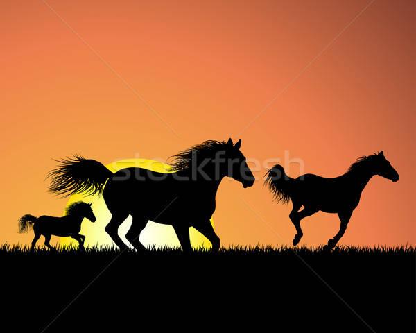 Paard zonsondergang silhouet hemel gras natuur Stockfoto © angelp