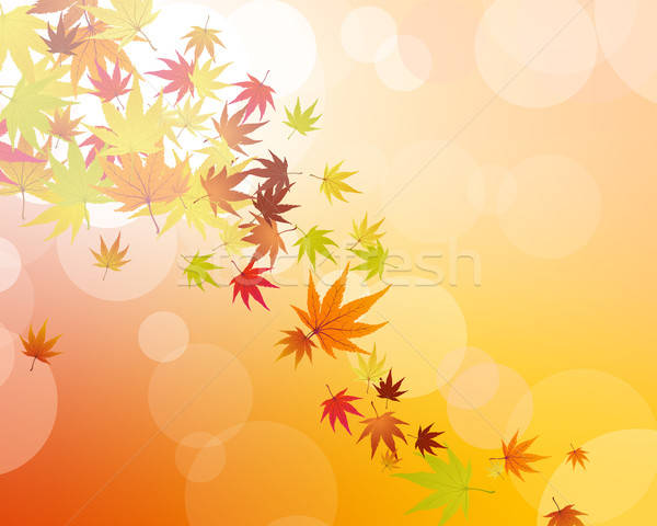 Bladeren patroon najaar abstract natuur blad Stockfoto © angelp