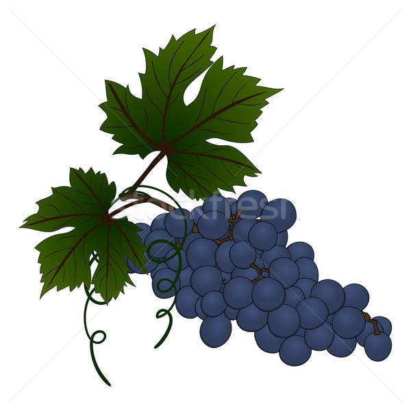 Grape branch Stock photo © angelp