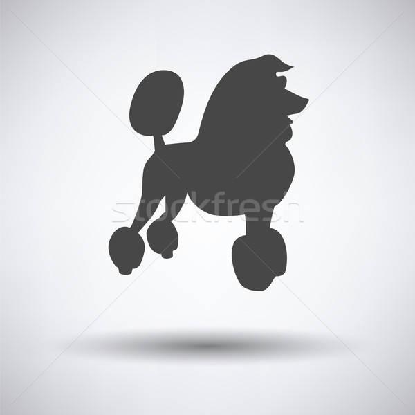 Barboncino icona grigio cane sfondo nero Foto d'archivio © angelp
