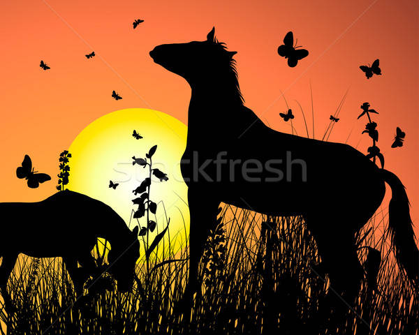 horse on sunset background Stock photo © angelp