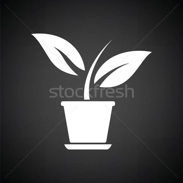 Plant bloempot icon zwart wit bloem gras Stockfoto © angelp