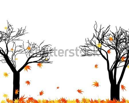 Stock photo: autumn tree