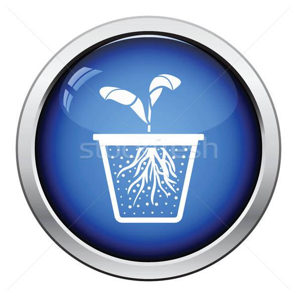 Kiemplant icon glanzend knop ontwerp voorjaar Stockfoto © angelp