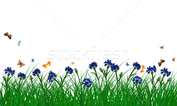 Cornflowers on summer meadow Stock photo © angelp