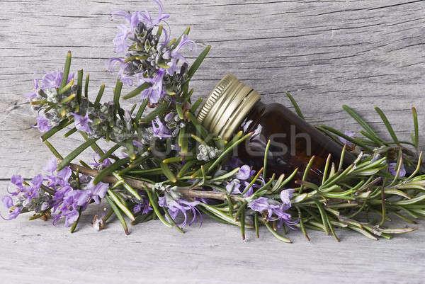 Rosmarijn fles essence oude houten Stockfoto © angelsimon