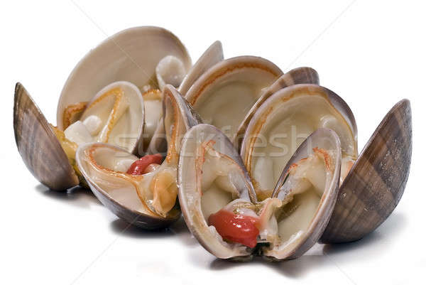 Clams over white. Stock photo © angelsimon