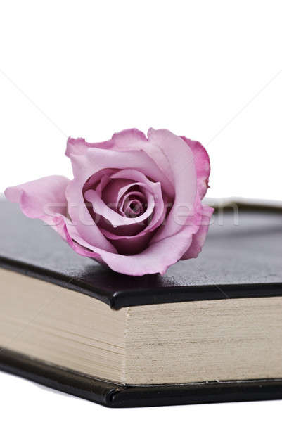 Rosa velho livro branco livros escolas Foto stock © angelsimon