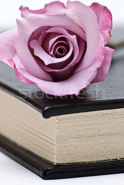 Taze gül kitap eski kitap beyaz Stok fotoğraf © angelsimon
