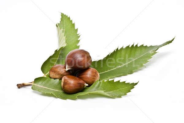 Chestnuts with their leaves. Stock photo © angelsimon