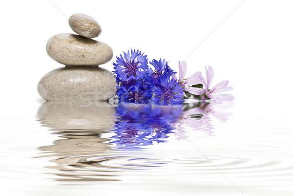 Foto stock: Zen · saldo · azul · flores · silvestres · branco · flores
