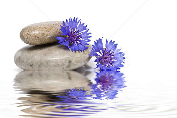 Zen balance with blue wild flowers. Stock photo © angelsimon