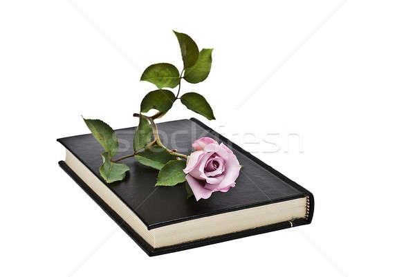 Zdjęcia stock: Kwiat · książki · starej · książki · biały · książek