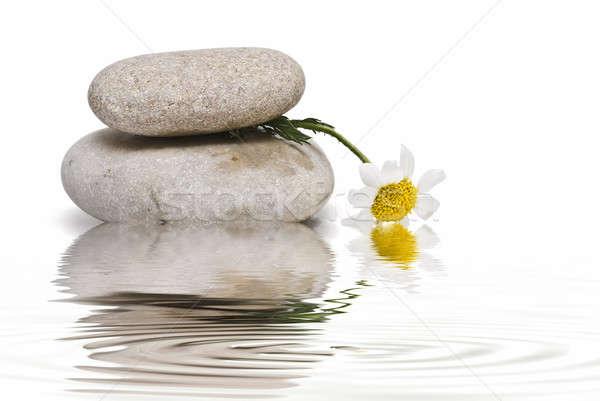 Zen dengelemek çiçek beyaz çiçekler sanat Stok fotoğraf © angelsimon