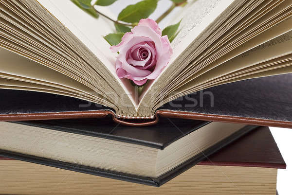 Pink flower in the book. Stock photo © angelsimon