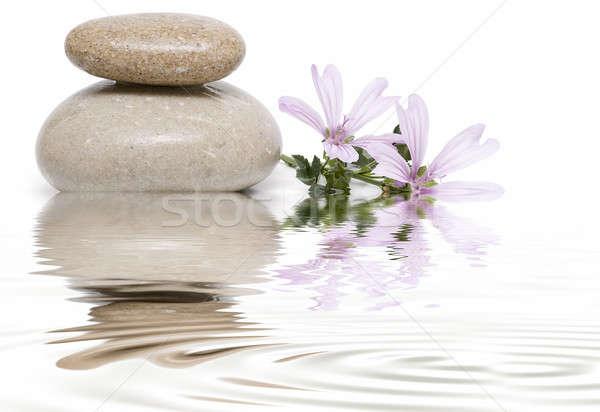 Zen evenwicht mauve bloemen witte kunst Stockfoto © angelsimon