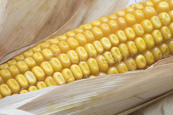 Closeup from maize ears. Stock photo © angelsimon
