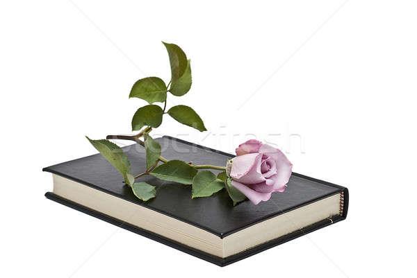 Zdjęcia stock: Wzrosła · książki · starej · książki · biały · kwiat