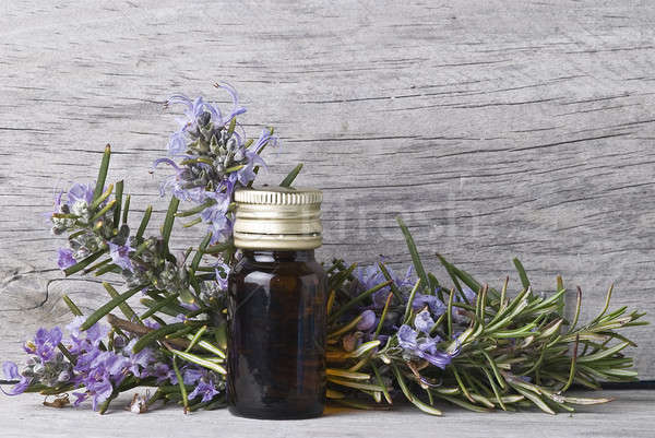 Rosemary with flowers. Stock photo © angelsimon