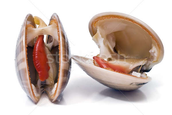 Two smooth clams. Stock photo © angelsimon